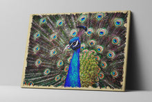Peacock Wall Art