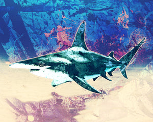 Shark Wall Art