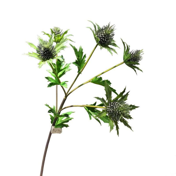 Sea Holly - 28""