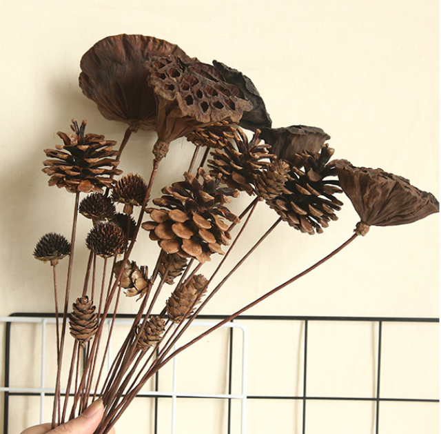 Pine Cones Set - 5pcs