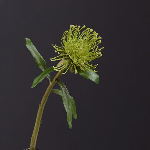 Pincushion Flower - 16""