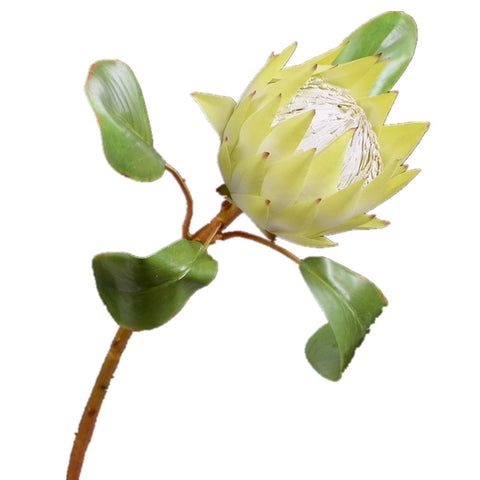 African Protea - 26""