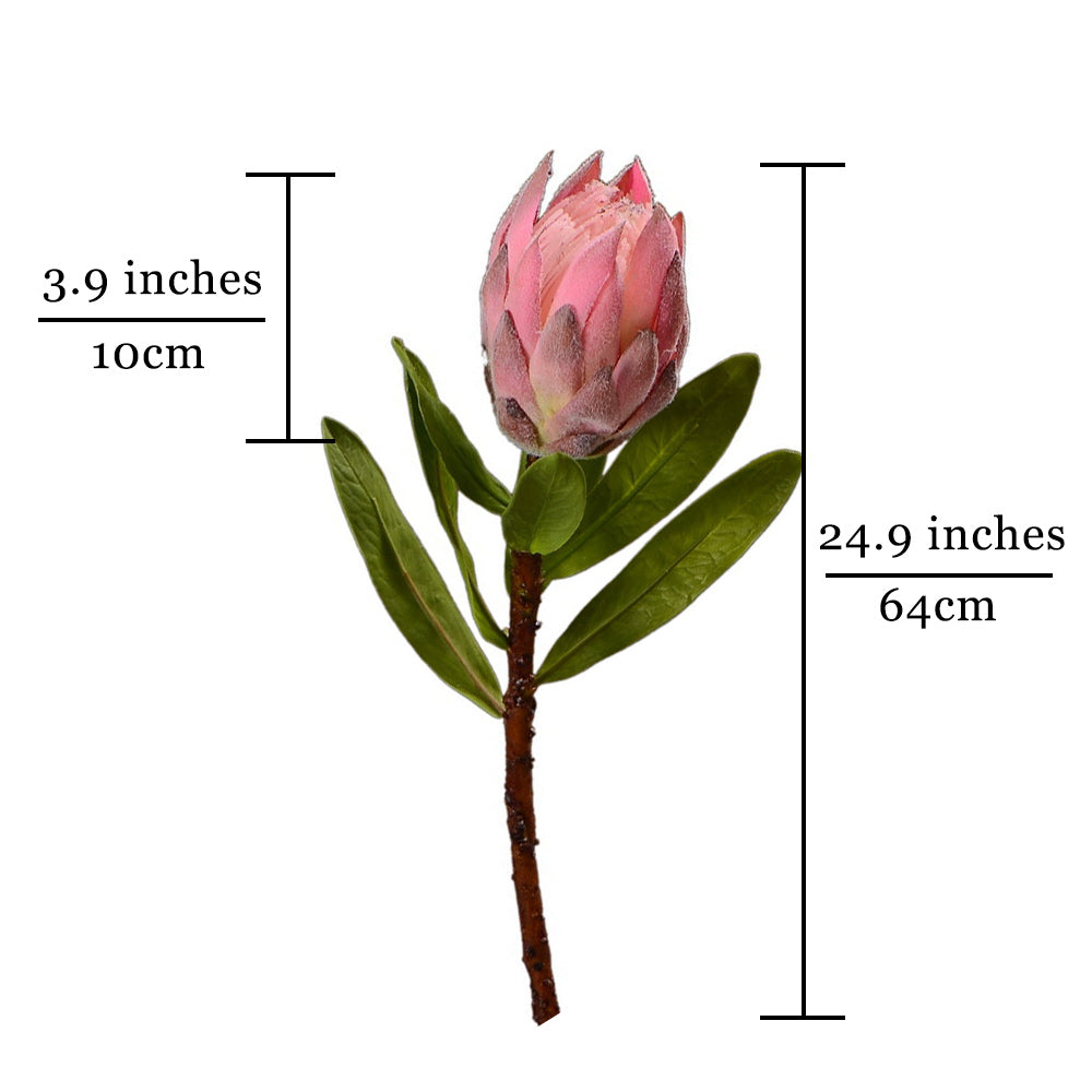 African Protea Dusty Pink - 25""