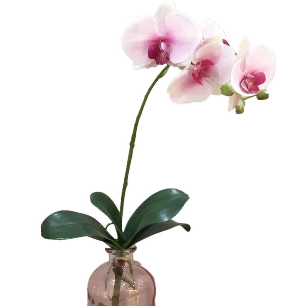 Orchid White Pink - 24""