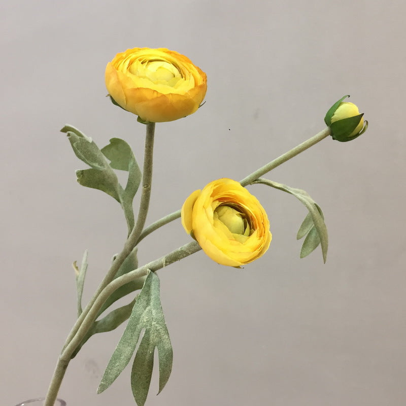 Ranunculus Bulbs Yellow - 15""