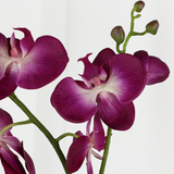"Orchid with Leaves - 30"" - Purple"