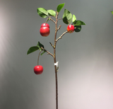 Apple Branch - 29""