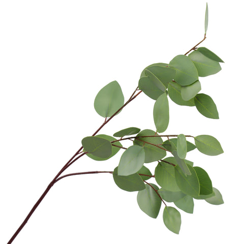Eucalyptus Leaves - 21""