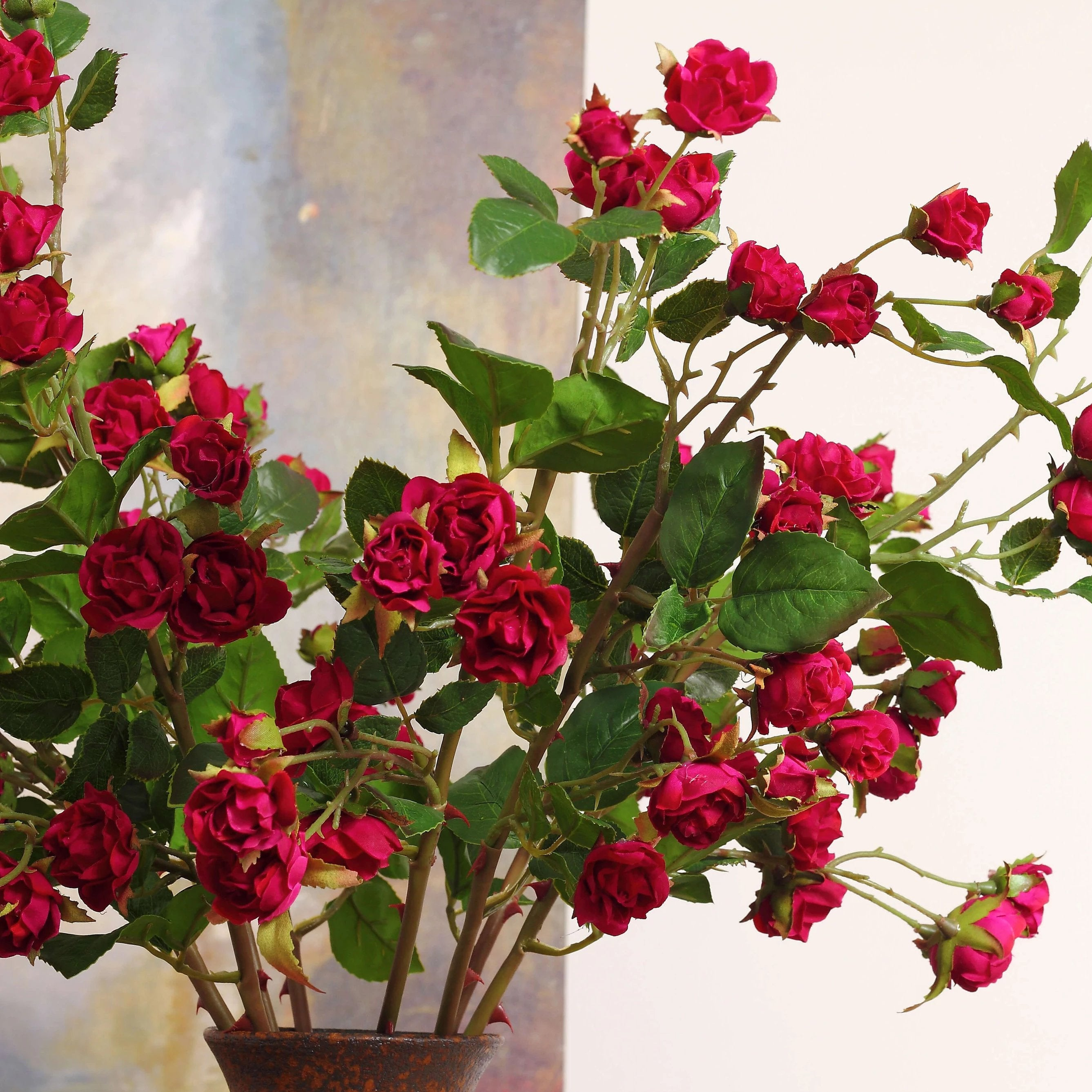 Louis Phillippe Rose Red - 29""