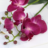 Orchid with Leaves - 17""