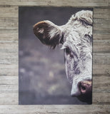 Hereford - Canvas