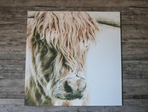 Highland Beauty - Canvas