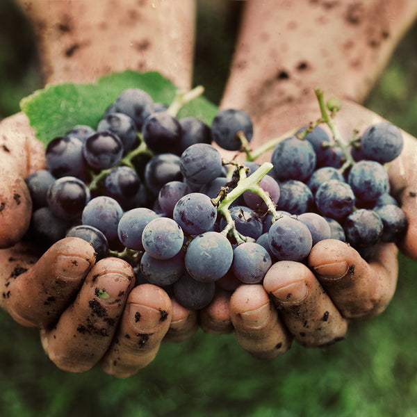 Biological, biodynamic and natural wine: a master wine class and 7 wines tasting