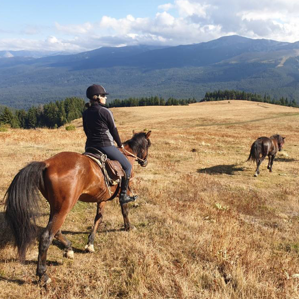 Horse riding in Rila for beginners - galloping to happiness. 5 or 10 Lessons. Rancho Rila.