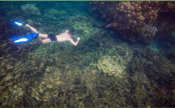 Full Day Diving Tour Koh Tao From Samui Island