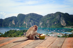 Full Day PHI PHI ISLAND by speedboat (Early Bird) from Khao Lak