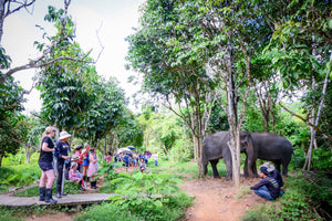 Half Day PHUKET ELEPHANT SANCTUARY