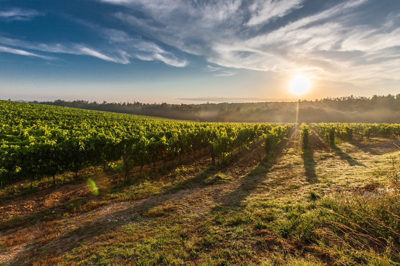 5 Wine Education Questions about Cool Climate and Warm Climate Wines