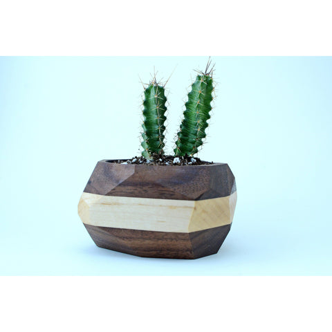 Walnut and Maple Planter - spa-noir