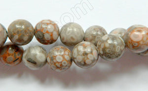 Ocean Fossil  -  Smooth Round Beads  16""