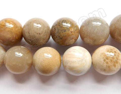 Natural Fossil Coral Jasper AA  -  Smooth Round Beads  16""