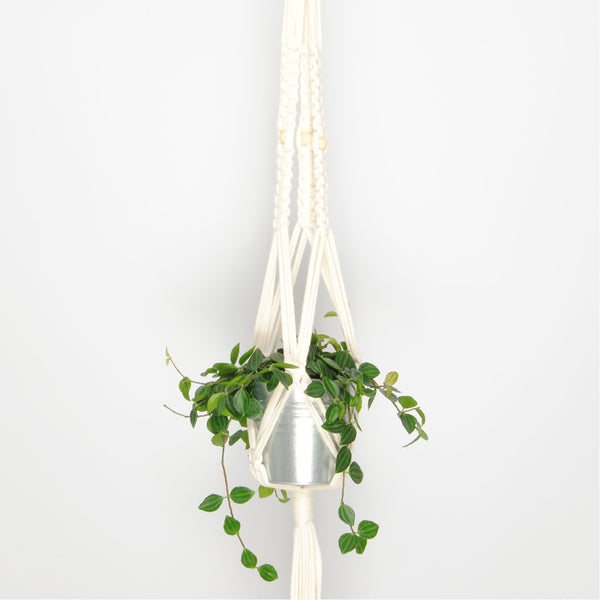THE 'PRIMULA' PLANT HANGER //ivory//