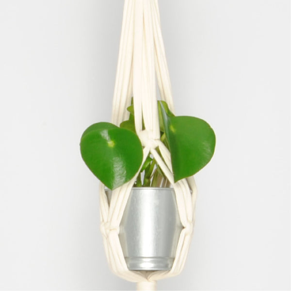 THE 'MINI-PRIM' PLANT HANGER //ivory//