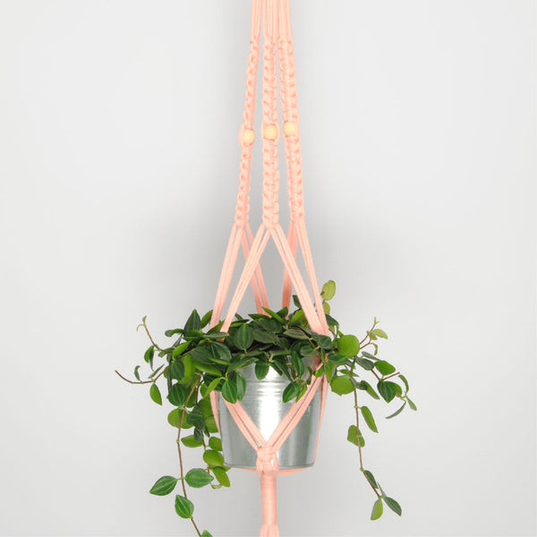 THE 'PRIMULA' PLANT HANGER //blush//