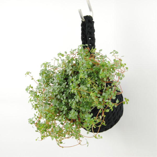 THE 'HYSSOP' PLANT POT //black//