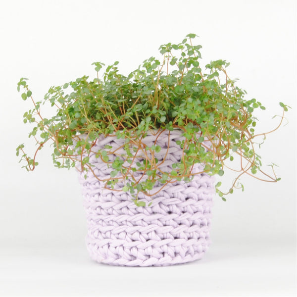 THE 'HYSSOP' PLANT POT //lilac//