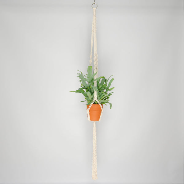 THE 'HELIX' PLANT HANGER //ivory//
