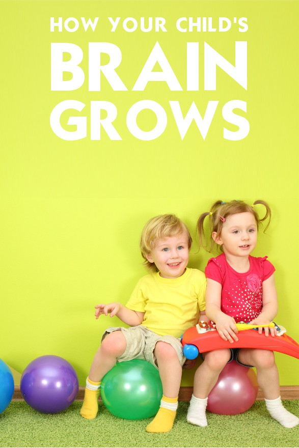 Brain Development – How Your Child's Brain Grows