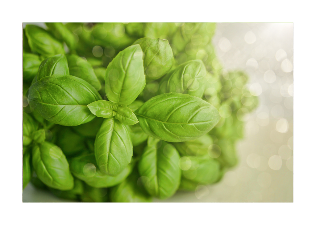 Basil 2.5 oz - Kosher Ceritified