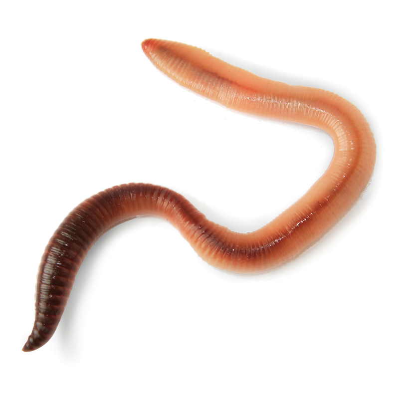 live worms for worm world interplay uk ltd