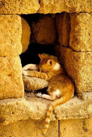 Cat sleeping in brick opening