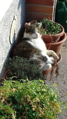 Cat sleeping on planters