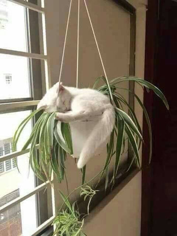 Kitten sleeping in hanging plant