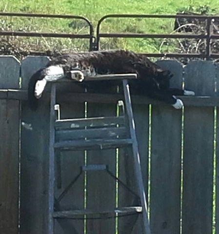 Cat sleeping on a ladder