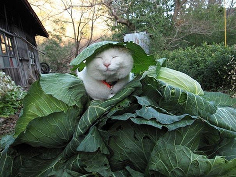 Cat sleeping in plants