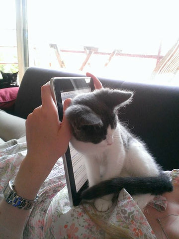 Kitten bocking Ipad