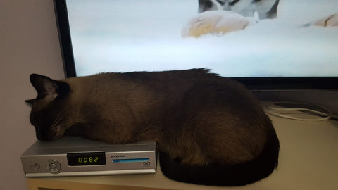 Cat sleeping on a dvd player
