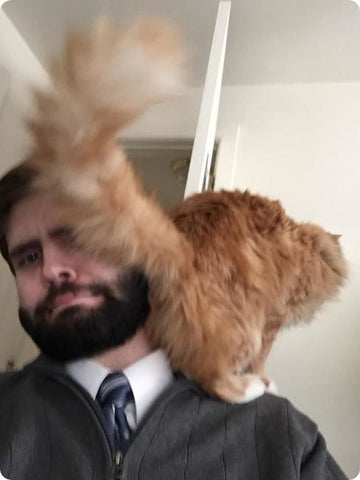 Cat on shoulders