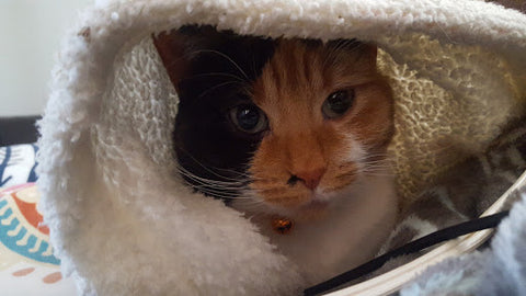 photo of cat under blanket
