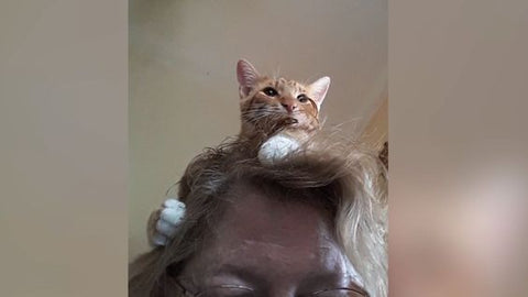 Cat sitting on a ladies head