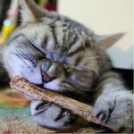 Cat Matatabi Chew Sticks - Bow Chicka Meow Meow