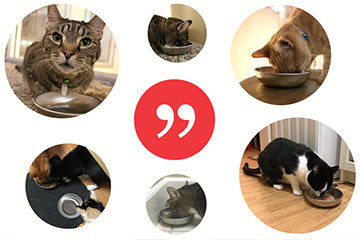 What Cat Lovers Are Saying about Americat Company Bowls...