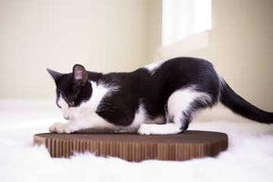 Why Do Cats Like to Scratch Furniture?