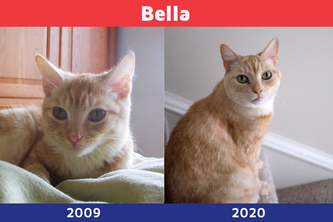 Bella as a kitten and an adult