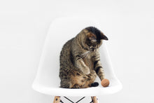 Load image into Gallery viewer, Cat playing with ball toy