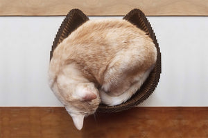 Orange cat sleeping in Americat cat scratcher bed